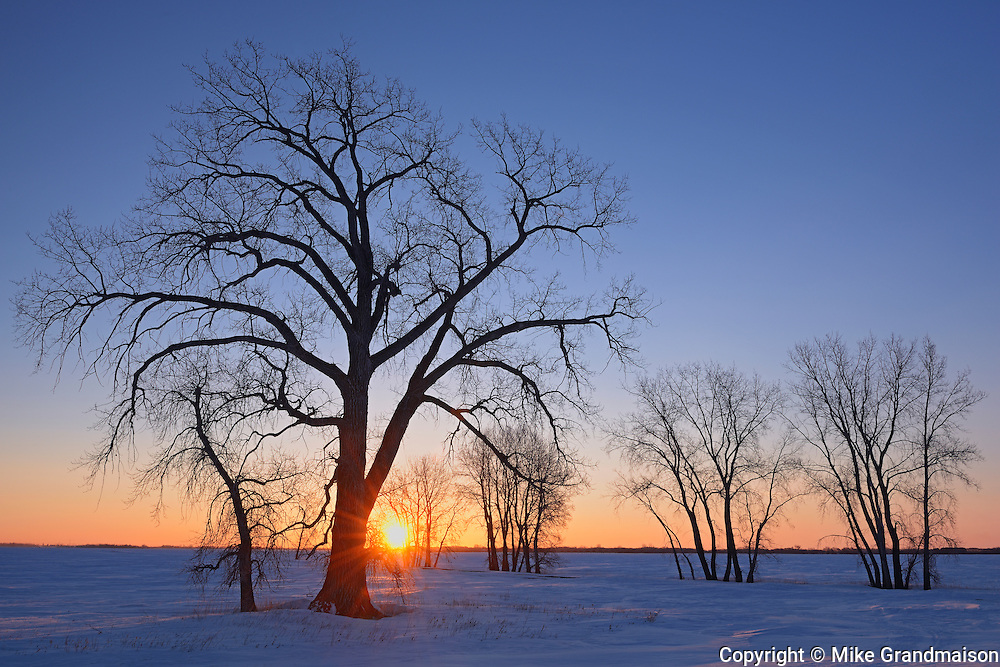 Sun rising over the prairie landscape with cottonwood and other trees<br /> Grande Pointe<br /> Manitoba<br /> Canada