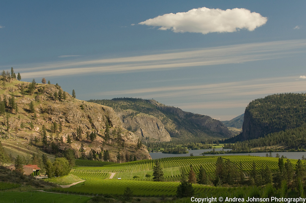 Blue Mountain Winery, Okanagan, British Columbia, Canada