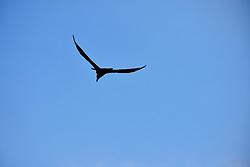 Blue Sky Profile, Arches National Park, Utah, USA
