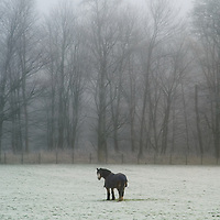 A single horse standing in a snow covered field with trees in England