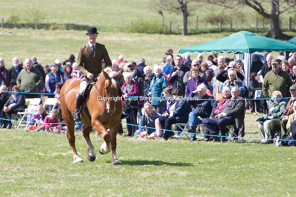 Champion Suffolk Punch<br />