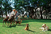 ARGENTINA, BUENOS AIRES, professional dogwalker or 'pasaperros' in Plaza San Martin, employed by apartment dwellers