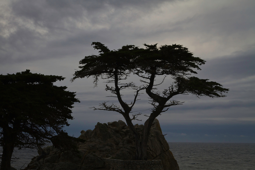 Lone Cypress silhouette at Pebble Beach