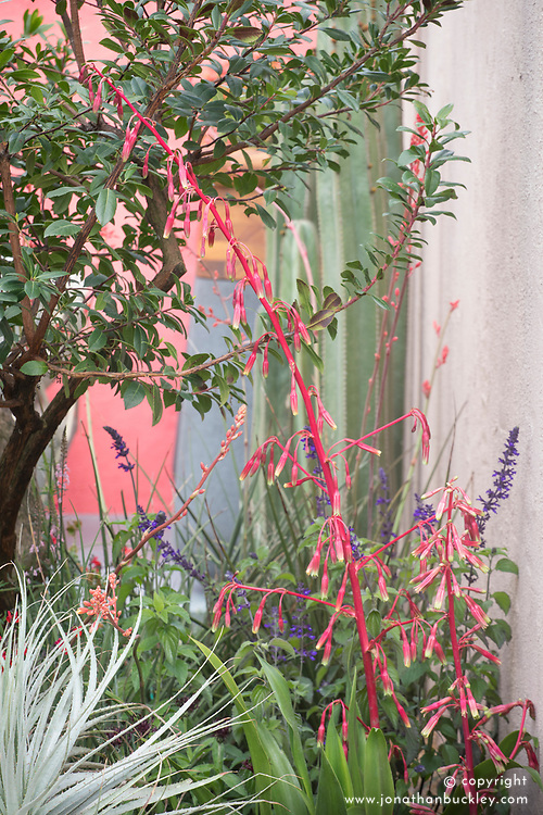 Beschorneria tubiflora with Puya coerulea<br /> Beneath a Mexican Sky Garden<br /> RHS Chelsea Flower Show 2017<br /> Design: Manoj Malde<br /> Built by: Living Landscapes<br /> Sponsored by: Inland Homes PLC<br /> Photography &copy; Copyright Jonathan Buckley