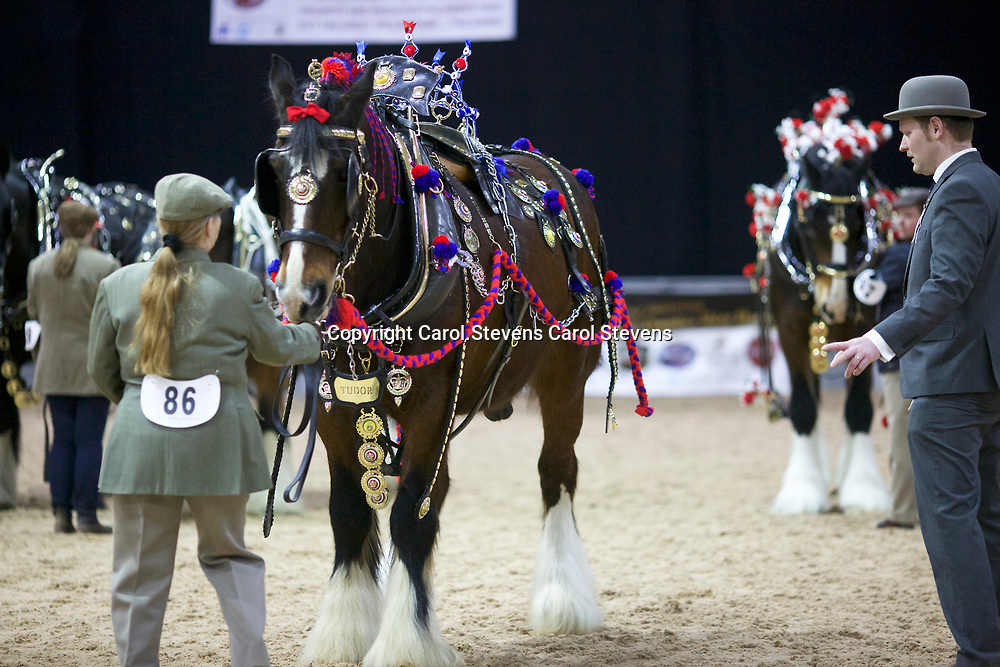 Maggie Smith and TRELOW TUDOR<br />