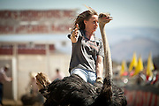Carla Burrell, of Virginia City, races an ostrich at the 51st annual International Camel Races in Virginia City, Nevada  September 12, 2010. .CREDIT: Max Whittaker for The Wall Street Journal.CAMEL