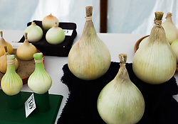 © Licensed to London News Pictures.12/08/15<br /> Danby, UK. <br /> <br /> Giant onions are exhibited during judging at the 155th Danby Agricultural Show in the Esk Valley in North Yorkshire. <br /> <br /> The popular agricultural show attracts competitors and visitors from all over the surrounding area to this annual showcase of country life. <br /> <br /> Photo credit : Ian Forsyth/LNP