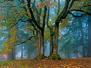 Misty fall at the summit loop in Mount Tabor Park, Portland, Oregon.