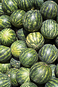 Freshly picked watermelons on display for sale on market stall at the old street market - Mercado -  in Ortigia, Syracuse, Sicily
