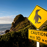 New Zealand, South Island, Punakaiki, Penguin Crossing sign along coast road in Paparoa National Park on summer evening