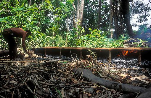 Hombre fabricando curiara en la selva, Delta Amacuro, Venezuela