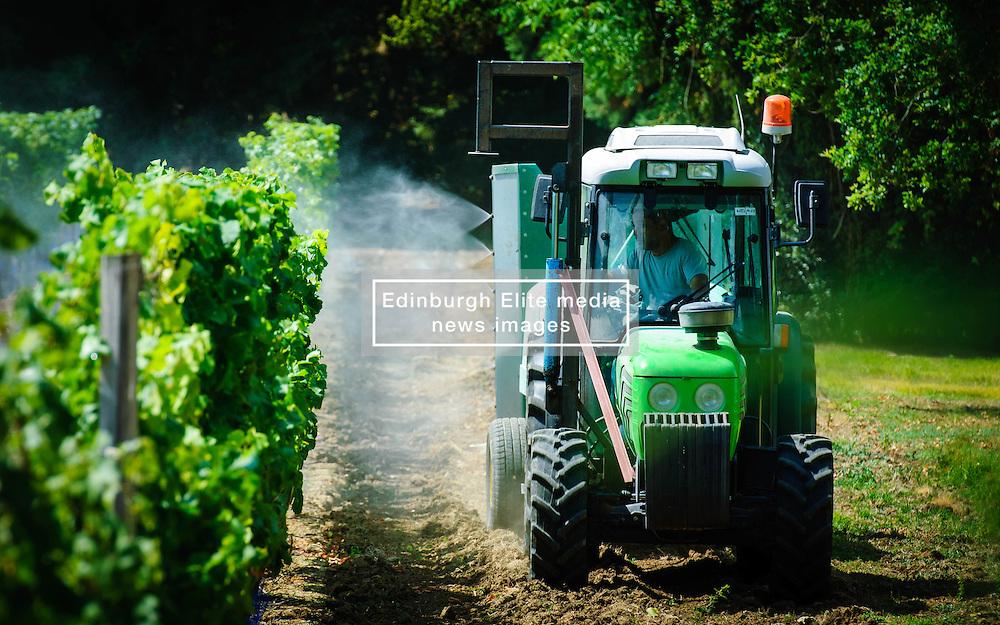 Farmer spraying the vineyard with water in the Dordogne, France in summer<br /> <br /> (c) Andrew Wilson | Edinburgh Elite media