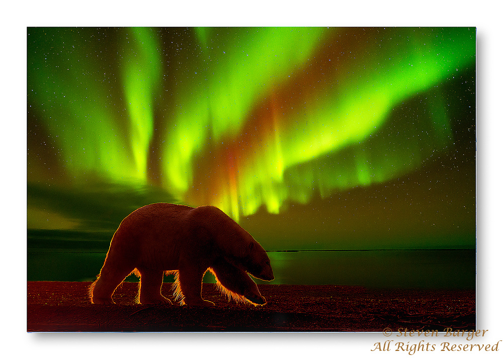 Composite image of a polar bear silhouette at sunset and aurora reflected in Beaufort Sea, Kaktovik Alaska.