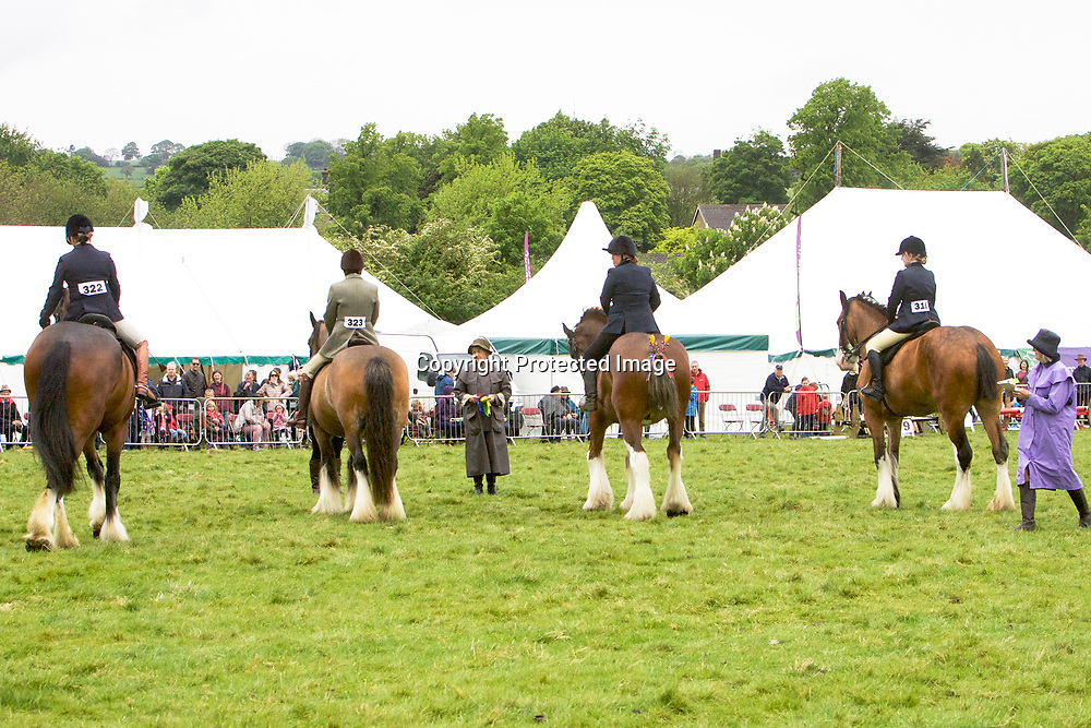 Ridden Heavy Horse Class<br /> The final line-up, from right to left<br /> 1st Hartcliffe Adele  and Rosie Metcalfe<br /> 2nd  Valliants Jester and Nathalie Cross<br /> 3rd  Beatrix  (Rider - unknown)<br /> 4th  Batley Joshua and Lizzie Chapman