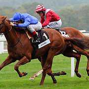 Horse race, Ascot, England (October 2007)