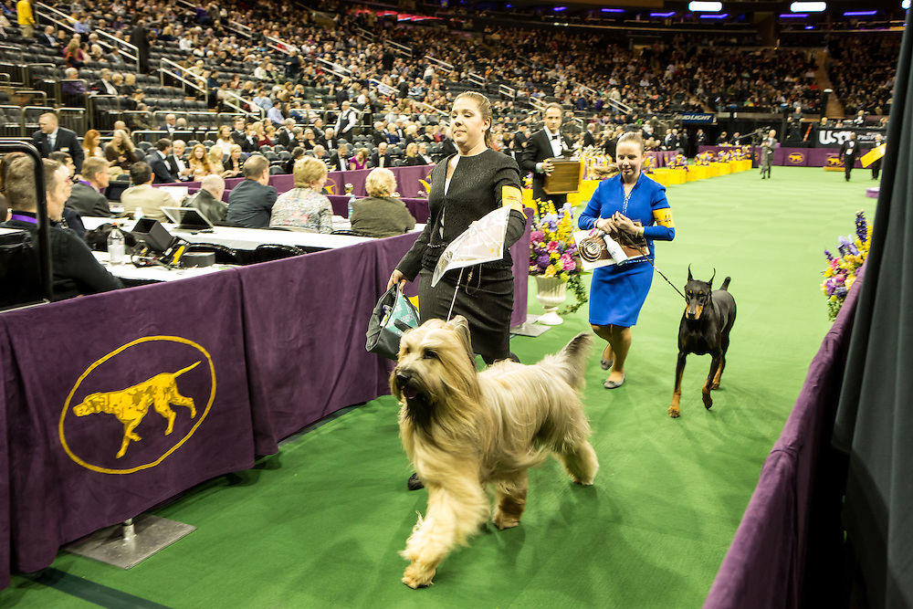 New York, NY - 16 February 2016. Junior contestants leaving the ring after the competition at the 140th Westminster Kennel Club Dog show in Madison Square Garden.
