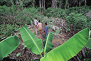 A slash-and-burn garden in the forest village of Sejal, Venezuela. (Man Eating Bugs page 168)