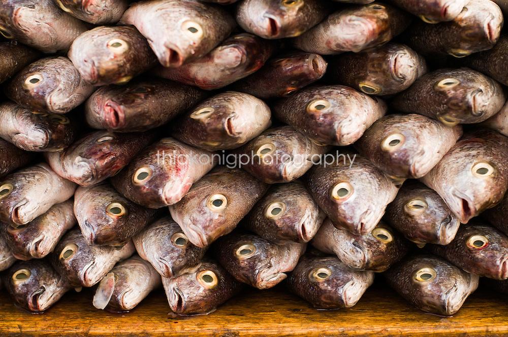 Stacks of whole dead fish at market, Ecuador.
