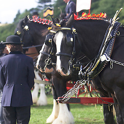 Kevin Morris driving his own Shires, Sergeant and Jack<br /> Warwick Shire Horse Carriages<br /> 9th  Pairs Turnouts