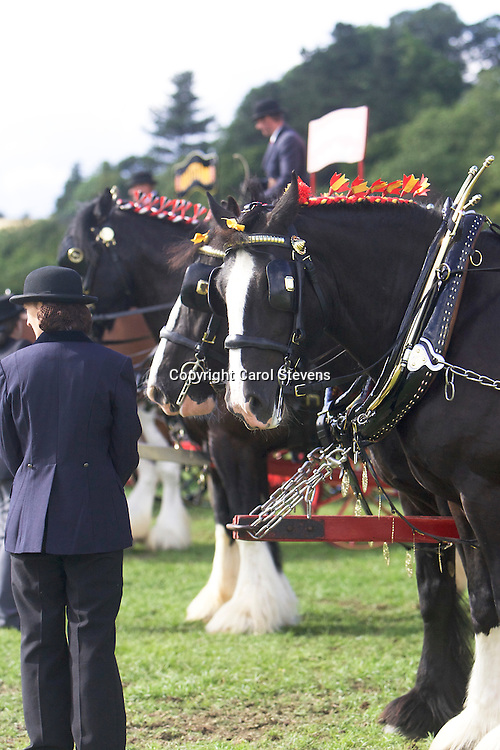 Kevin Morris driving his own Shires, Sergeant and Jack<br />