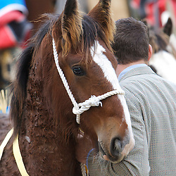 North West & Wales Shire Foal Society Show and Sale 2012