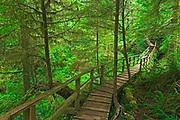 Boardwalk in the temperate rain forest<br />Pacific Rim National Park<br />British Columbia<br />Canada<br />Pacific Rim National Park<br />British Columbia<br />Canada