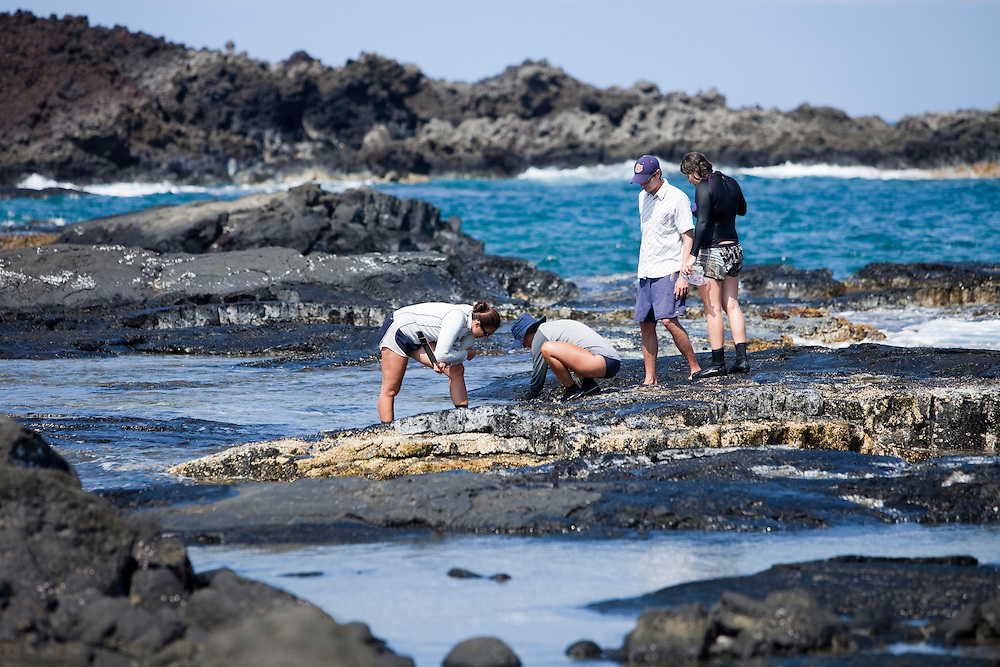 Intertidal surveys at Kalaemano, Kaupulehu, North Kona - pictured, Matt Iacchei and studentsBig Island, Hawaii, `opihi survey