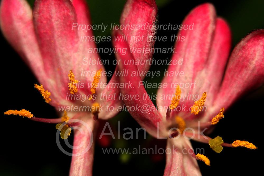 03 May 2007: Macro shots from backyard, flowering shrub.
