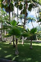 Jardin de Balata botanical garden, Fort-De-France, Martinique, France