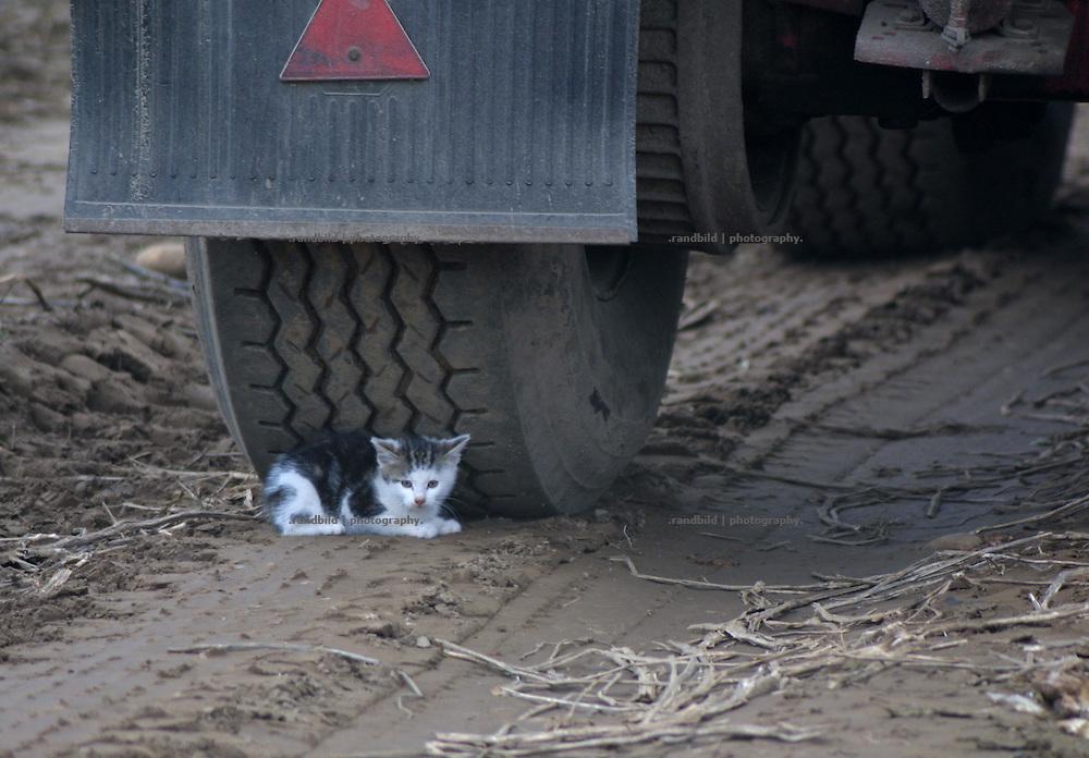 Ein Katzenkind versteckt sich am Rande eines Ackers unter einem grossen landwirtschaftlichen Anhänger.