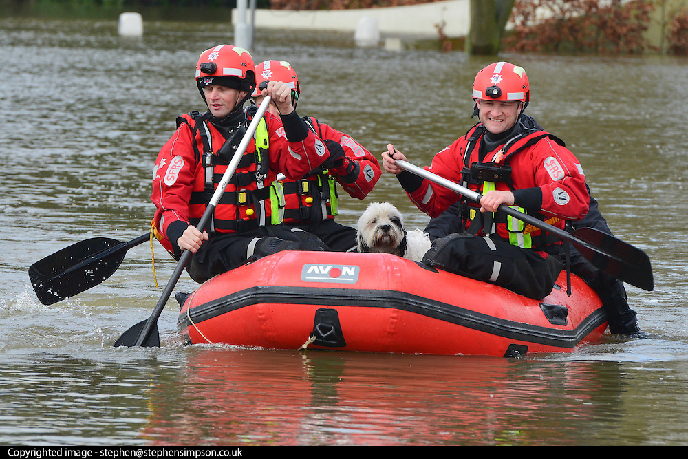 """© Licensed to London News Pictures. 10/02/2014. Old Windsor, UK. Firefighters bring dog """"Beau"""" to dry land after carrying out a series of rescues in the village centre.  Flooding in OLD WINDSOR in Berkshire today 10th February 2014 after the River Thames burst its banks. The Environment Agency has issued 14 Severe Flood Warnings alone the Thames. Photo credit : Stephen Simpson/LNP"""