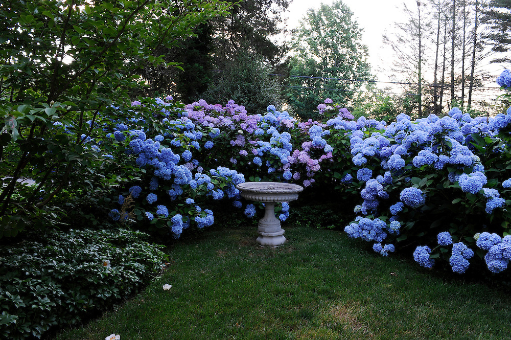 NIKKO BLUE HYDRANGEA AND STONE BATH