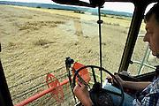 Nederland, Ooijpolder, 10-8-2004..Door het hele land zijn akkerbouwers en loonbedrijven in de weer de graanoogst binnen te halen. Na vandaag is het weer wisselvalliger, dus maken zij dagen van 8 tot 12 in de nacht, zoals deze akkerbouwer, die zijn  perceel bij Ooij zelf met de combine binnenhaalt. landbouw, graanprijs, voedselproductie, subsidies, europa, combine, mechanisatie...Foto: Flip Franssen/Hollandse Hoogte