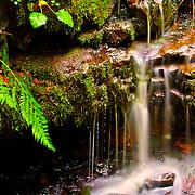 Water trickling in Lower Macleay Park - Portland, OR