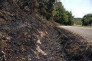 roadside after a bush fire