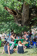 Shelter is sought under every tree as the sun beats down on the festival - The 2016 Latitude Festival, Henham Park, Suffolk.