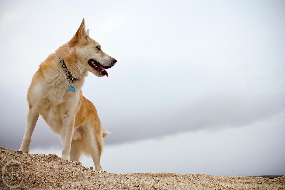 Lobo stands proud.