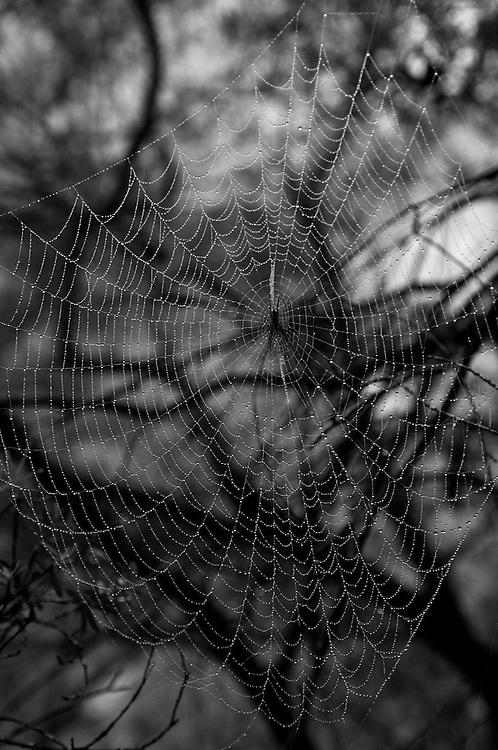 Blue Mountains Web