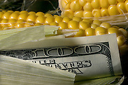 Photo stock for Ethanol in the Midwest. .Photo illustration of the economic impact of ethanol and corn..  Photo by Chris Machian