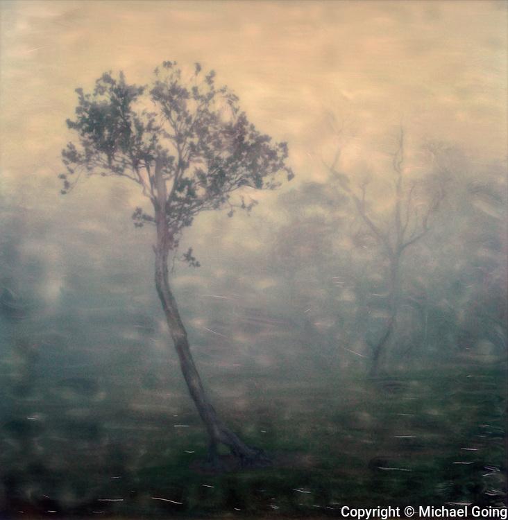 hand altered Polaroid of lone tree in fog, mist and clouds Kokee, Kauai Hawaii