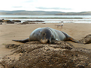 after surfing with this fur seal for over half an hour, it followed me in from the shore and plopped its head on the rock!