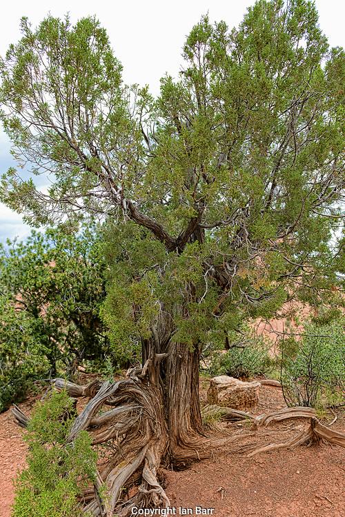 Garden of the Gods,Colorado Springs,Colorado