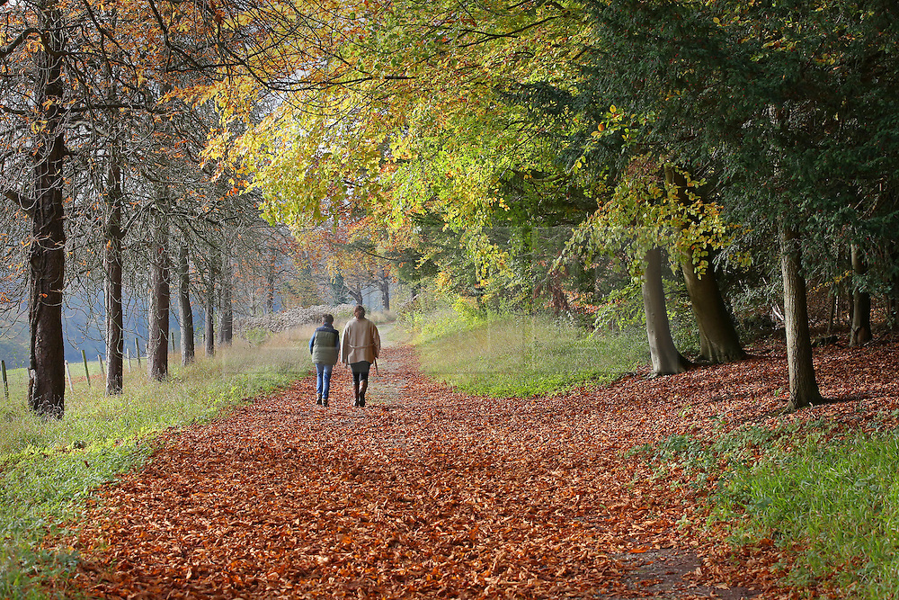© Licensed to London News Pictures. 27/10/2015. Dorking, UK. People walk on a carpet of fallen leaves near Polesden Lacey. Photo credit: Peter Macdiarmid/LNP