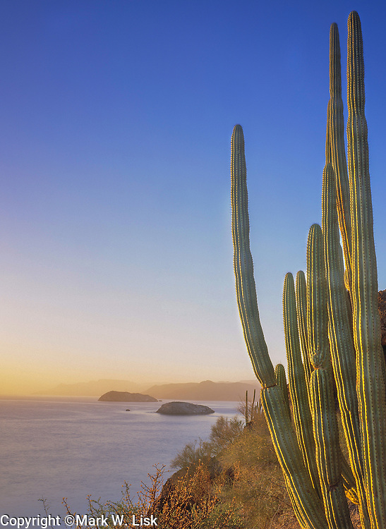 Cactus rest high on the shore of the Sea of Cortez, where the Sonoran Desert meets the sea, Mexico.