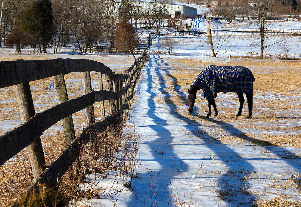 A wooden fence casts long shadows and a horse grazes in the field on a winter day in rural Loudoun County, VA