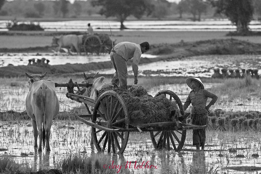 Farmers planting rice more or less as their forbearers did centuries ago.