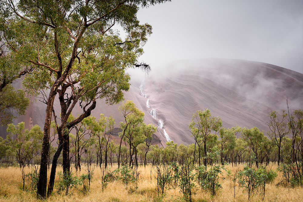 Detail of trees at Uluru in wet weather