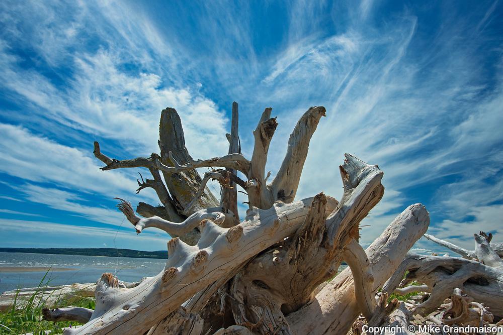 FDriftwood along La Plage de Penouille (Atlantic Ocean)<br />Forillon National Park<br />Quebec<br />Canada