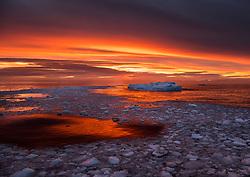 Adelie Penguin (Pygoscelis adeliae) on iceberg at sunrise in Antarctica