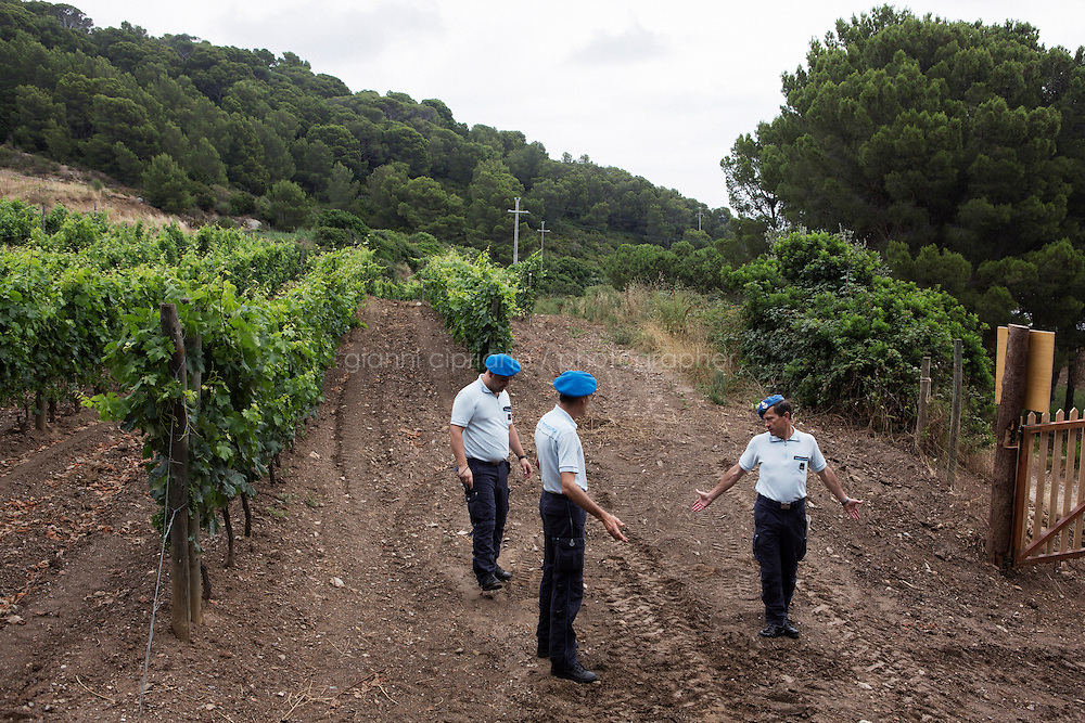 GORGONA, ITALY - 27 JUNE 2014: Prison officers are here in the one-hectare vineyard of the &quot;Frescobaldi per Gorgona&quot; project, in Gorgona, Italy, on June 27th 2014.<br /> <br /> Gorgona is the smallest island of the Tuscan archipelago, located 18 miles west of Livorno, which became an experimental agricultural penal colony in 1869.<br /> <br /> The &ldquo;Frescobaldi per Gorgona&rdquo; project  provides inmates the opportunity to learn winemaking techniques and job skills under the supervision of the company&rsquo;s agronomists and winemakers, led by Vice President Lamberto Frescobaldi himself. Fifty inmates contributed to the production of Gorgona, a white wine made from Vermentino and Ansonica grapes planted on the island of Gorgona in the Tyrrhenian Sea, close to the Tuscan coast. The Frescobaldi family purchased a hectare of old vineyards and will expand with more vineyards in the upcoming months. Total production is only 2,700 bottles, but 1,000 of the bottles will reach the US market through Frescobaldi importer Folio Fine Wine Partners, in the Fall.<br /> <br /> Born in August 2012, the Gorgona initiative was financed by the Department of Penitentiary Administration and accomplished through the collaboration of the Gorgona Penitentiary's Directorate and Marchesi de&rsquo; Frescobaldi.
